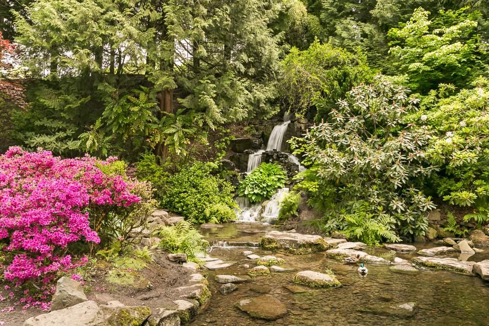 Crystal_Springs_Rhodie_Gardens_2