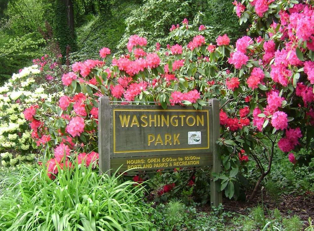 Washington_Park_Rhodies